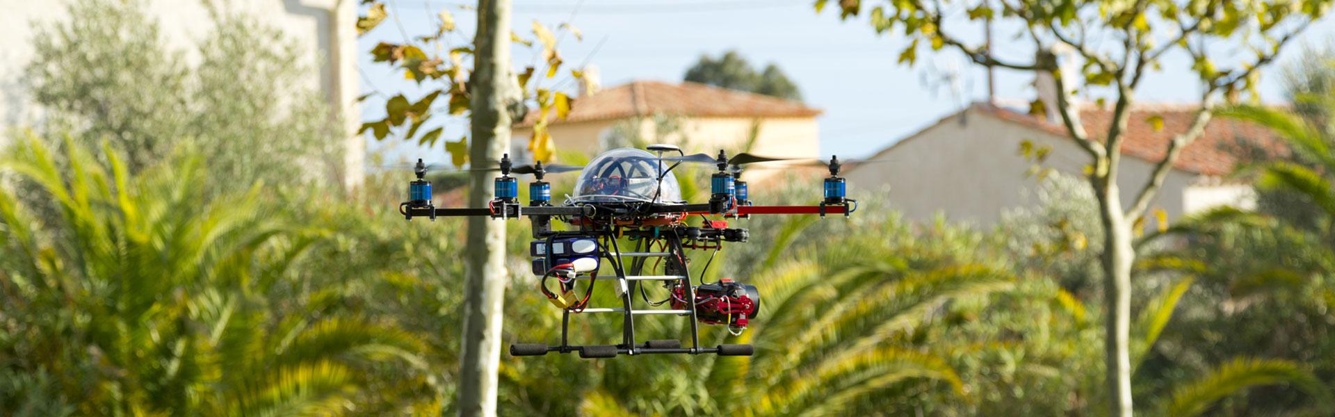 Palmeraie filmée par un drone dans le Var à Fréjus